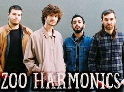 אינדיסטודיו: Zoo Harmonics vs. Free Sergio